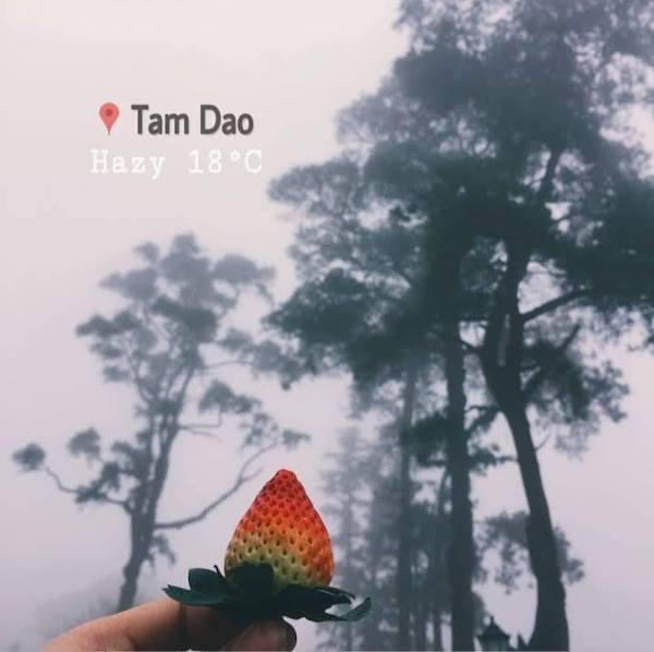 tam-dao-12